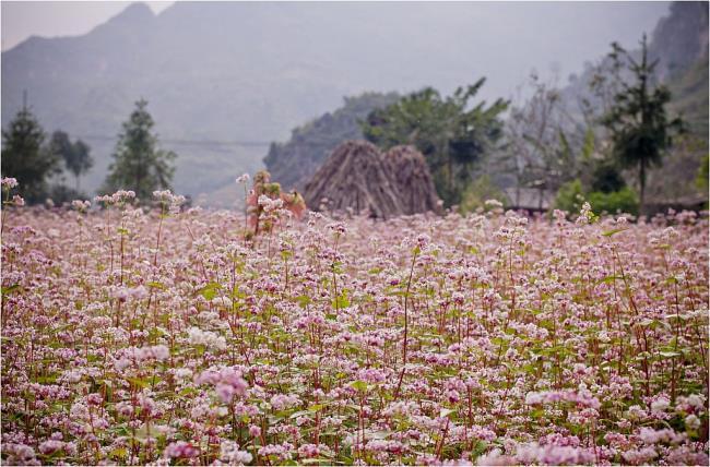 Gambar padang bunga segitiga litar yang indah