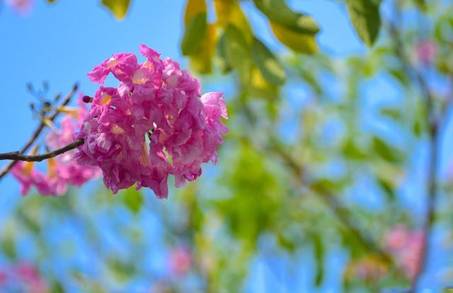 सबसे सुंदर गुलाबी गुलाब की छवियों का संग्रह