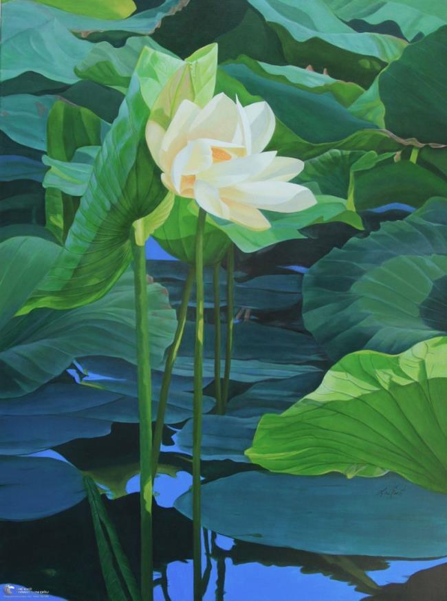 خلاصه تصاویر زیبای نیلوفر آبی سفید 11