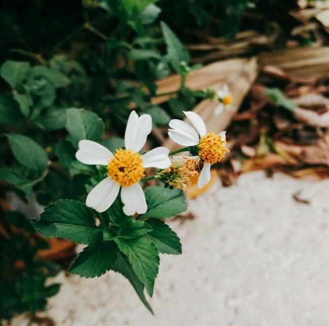 Poèmes de fleurs sur le tore