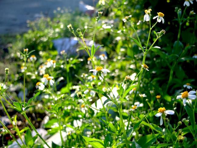 Flower poems about torus