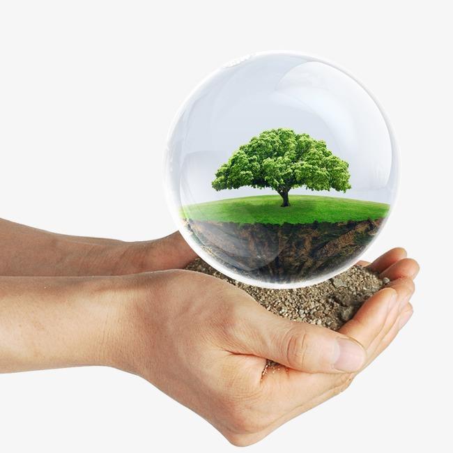 पर्यावरण संरक्षण की सबसे सुंदर छवि का सारांश