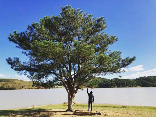 ダラットで最も美しい松の木のまとめ