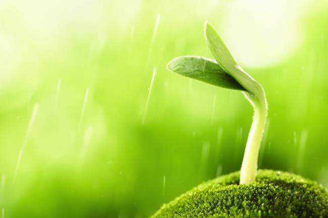 हरी कलियों के सुंदर चित्र का अंकुर अंकुरित होना