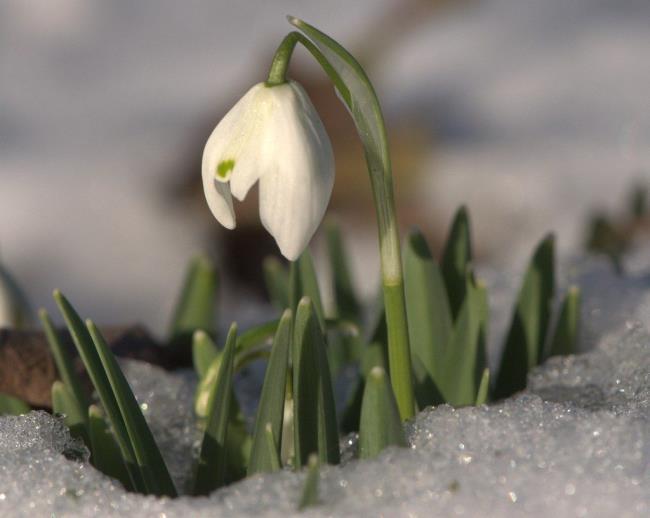 Resumo dos flocos de neve mais bonitos