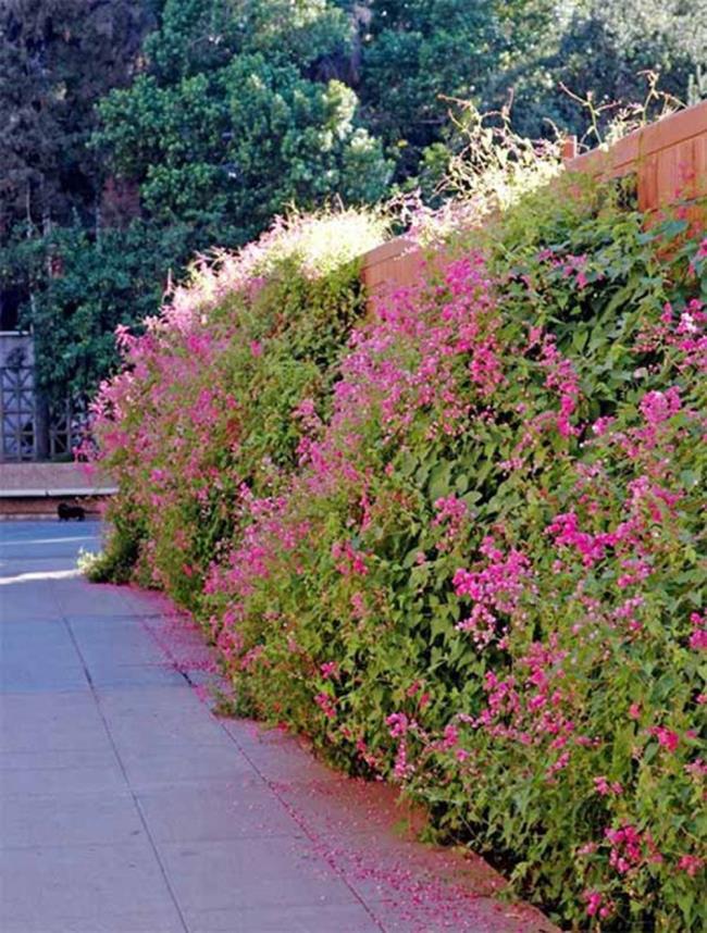 Gambar bunga harimau merah jambu yang indah