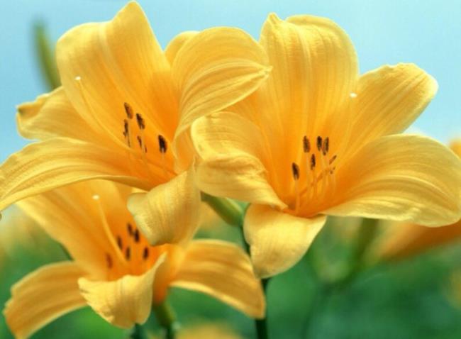 सुंदर बाख हॉप फूल - सबसे सुंदर बाख हॉप फूल छवियों 55