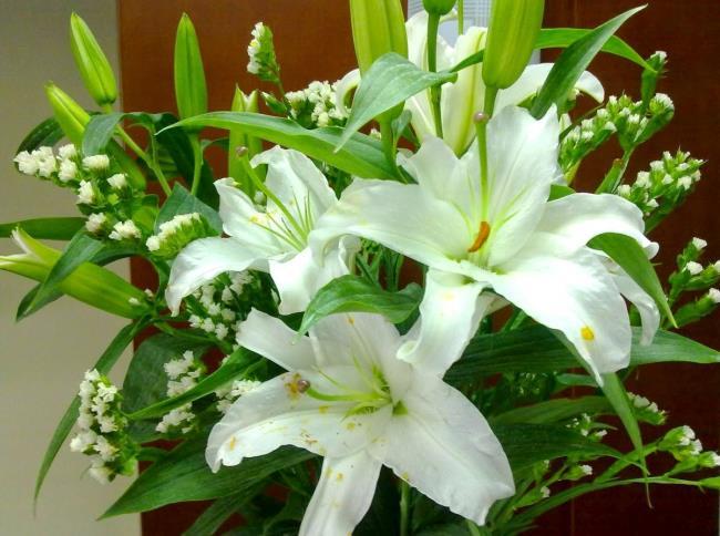 सुंदर बाख हॉप फूल - सबसे सुंदर बाख हॉप फूल चित्र 4