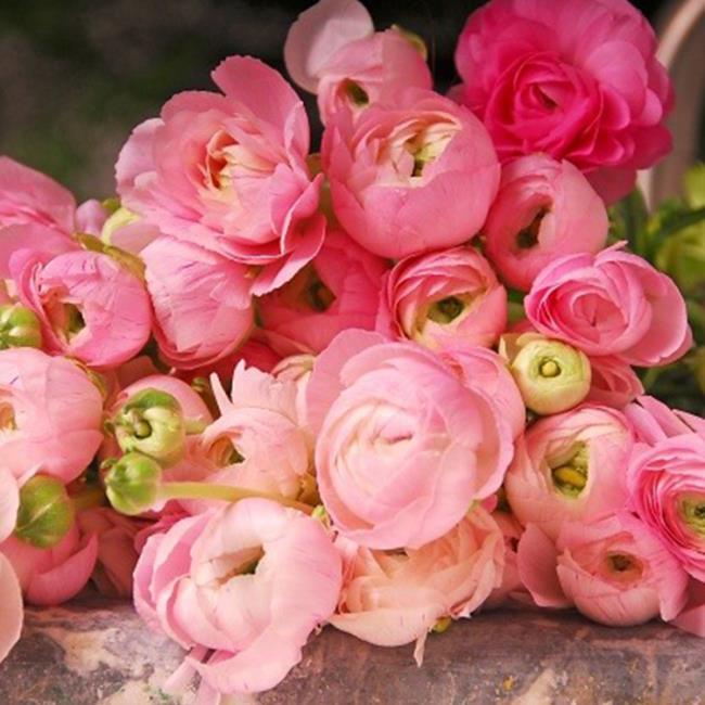 Сводка самых красивых цветов лютика