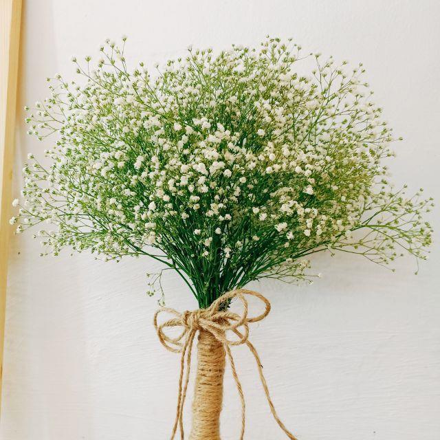 सफेद बच्चे के फूलों की सबसे खूबसूरत तस्वीरों का सारांश