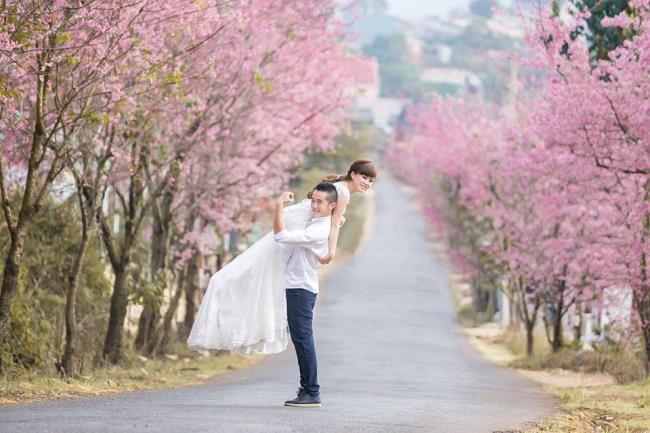 Bilder von schönen Kirschblüten in Vietnam