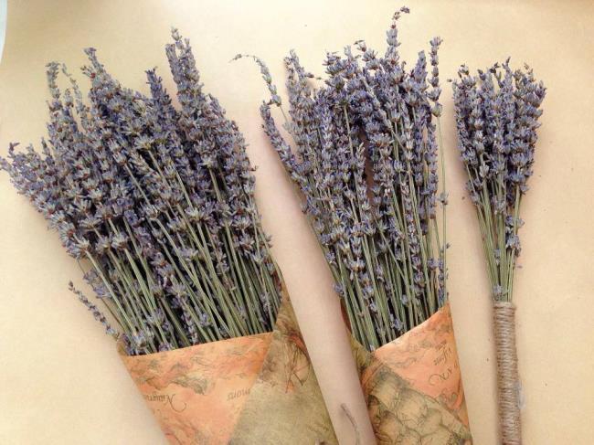ترکیب تصاویر از زیباترین اسطوخودوس خشک