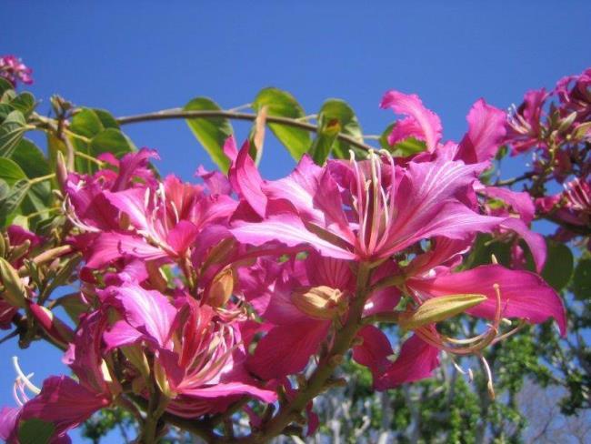 Résumé des plus belles fleurs en peau de vache