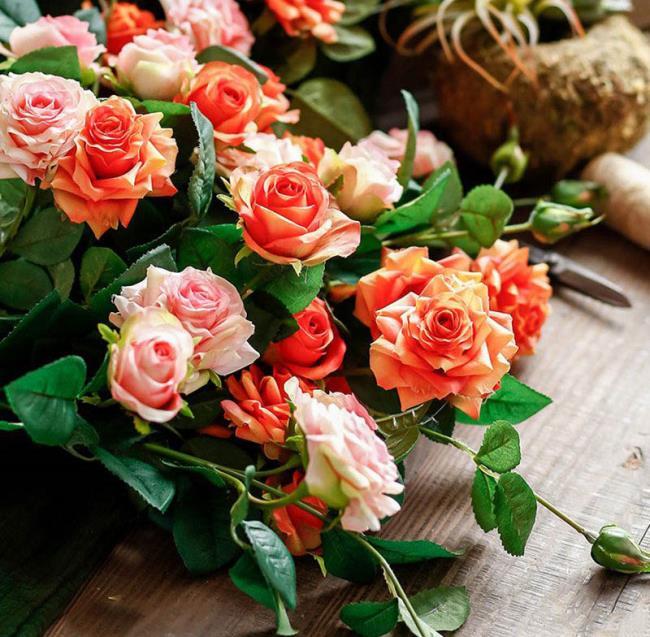 Kombinieren Sie Bilder der schönsten Salbeirosen
