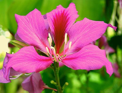 ملخص أجمل زهور جلد البقر