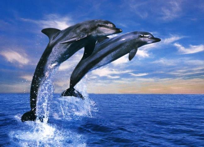 सबसे सुंदर डॉल्फिन का संग्रह