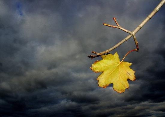 प्यार के पेड़ और पत्तियों के बारे में कविता का एक गुच्छा