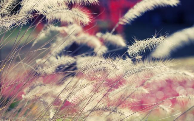 Synthese des schönsten Rosenbildes (Black Pink)