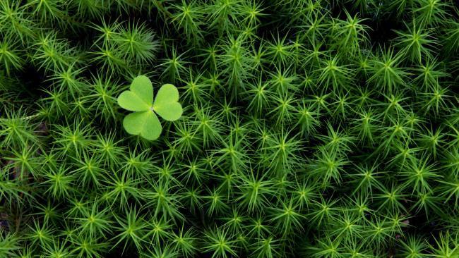सबसे सुंदर हरी घास वॉलपेपर का संग्रह