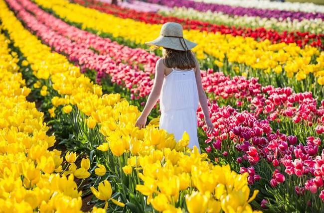 Schöne Tulpenfestbilder