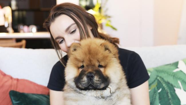 Synthèse du plus beau chien Chow Chow