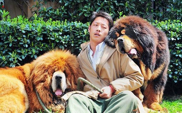 die größte Hunderasse der Welt