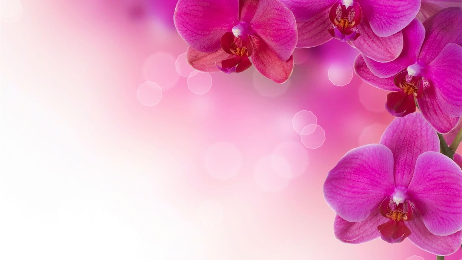 Wallpaper powerpoint tema bunga yang indah