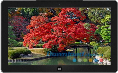 Couleur d'automne au Japon - thème de l'automne japonais