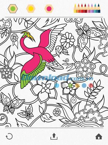 Colorfy für iOS 2.1 - Malbuch für Erwachsene