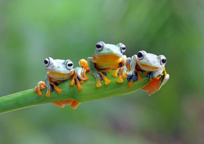 Mensintesiskan sekumpulan foto katak yang unik dari seluruh dunia